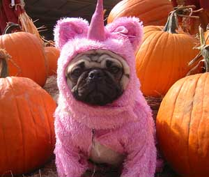 Pug? Unicorn? You don't have to decide.