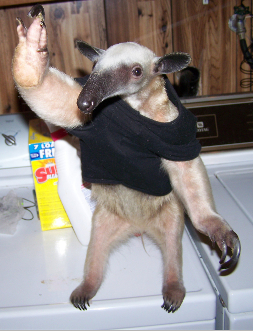 I'm an anteater... eff you!