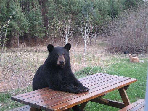 I can haz picnic basket?