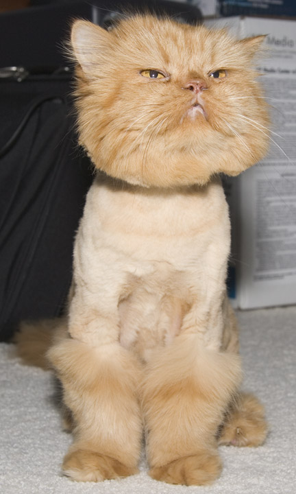 Poodle cat?… (no shaven pussy gags please) | The Blog Casanova