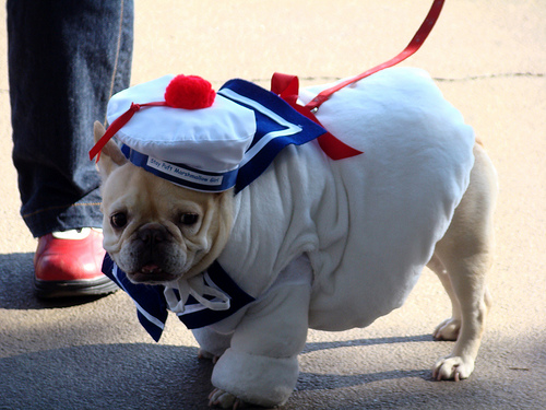stay puft marshmallowdog